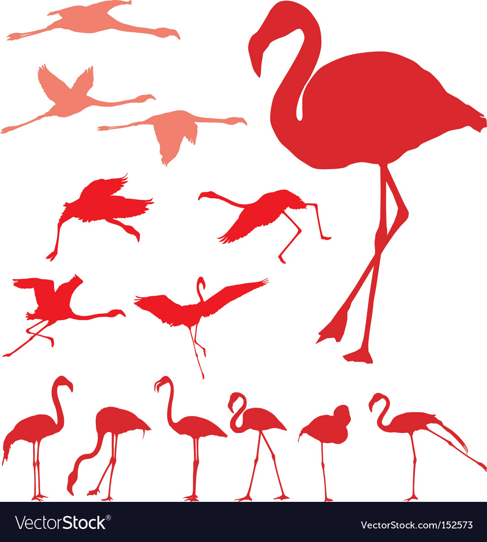 Pink flamingo set vector | Price: 1 Credit (USD $1)