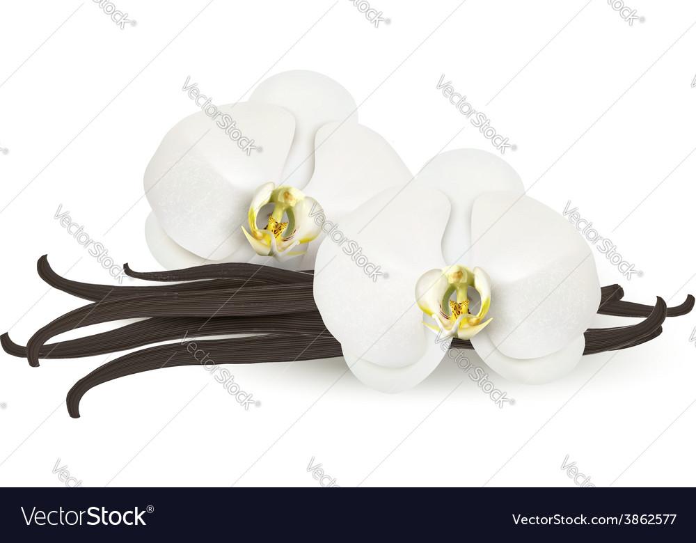 Vanilla background vector | Price: 3 Credit (USD $3)