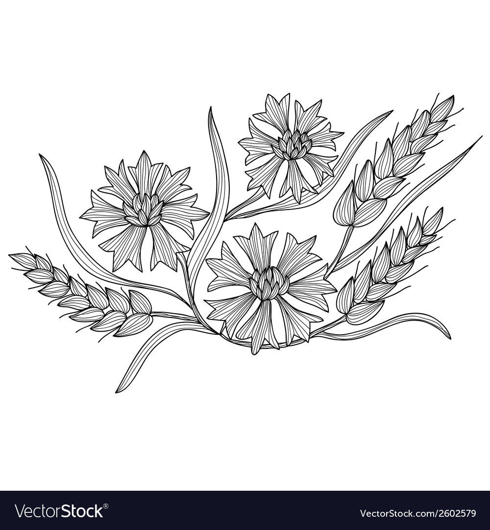 Decorative cornflower and wheat vector | Price: 1 Credit (USD $1)