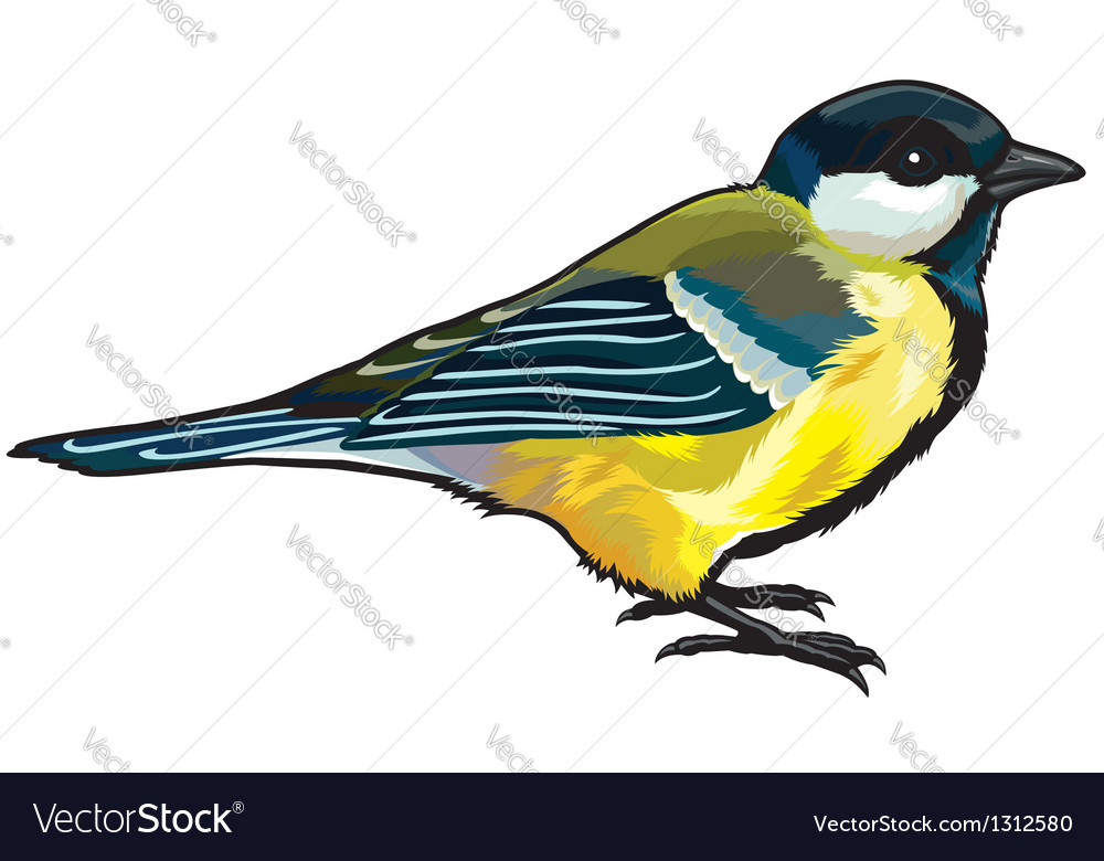 Great titmouse vector | Price: 1 Credit (USD $1)