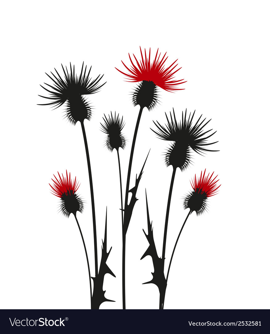 Thistle vector | Price: 1 Credit (USD $1)