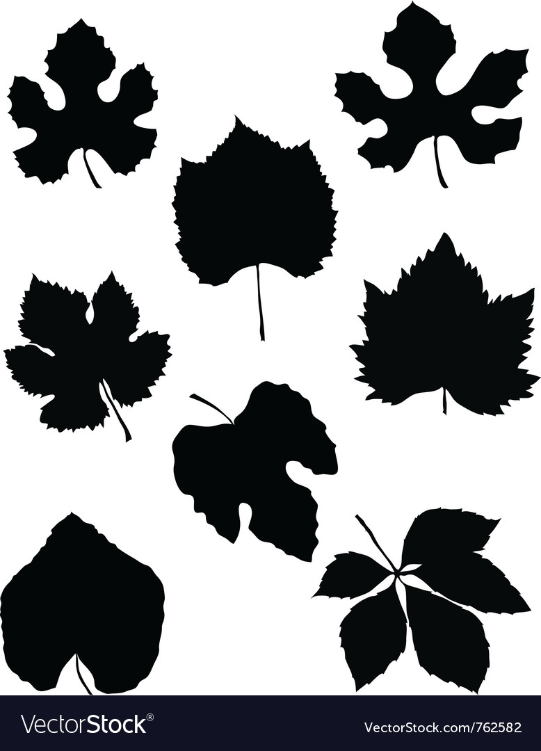 Grape leaf vector | Price: 1 Credit (USD $1)