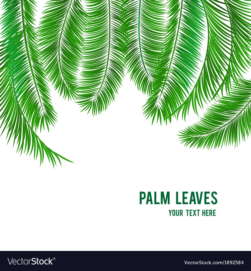Tropical palm tree background banner vector | Price: 1 Credit (USD $1)