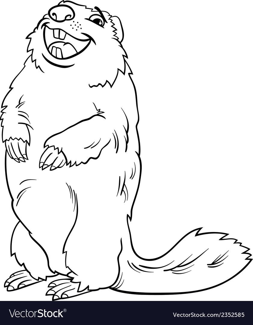 Marmot animal cartoon coloring book vector | Price: 1 Credit (USD $1)