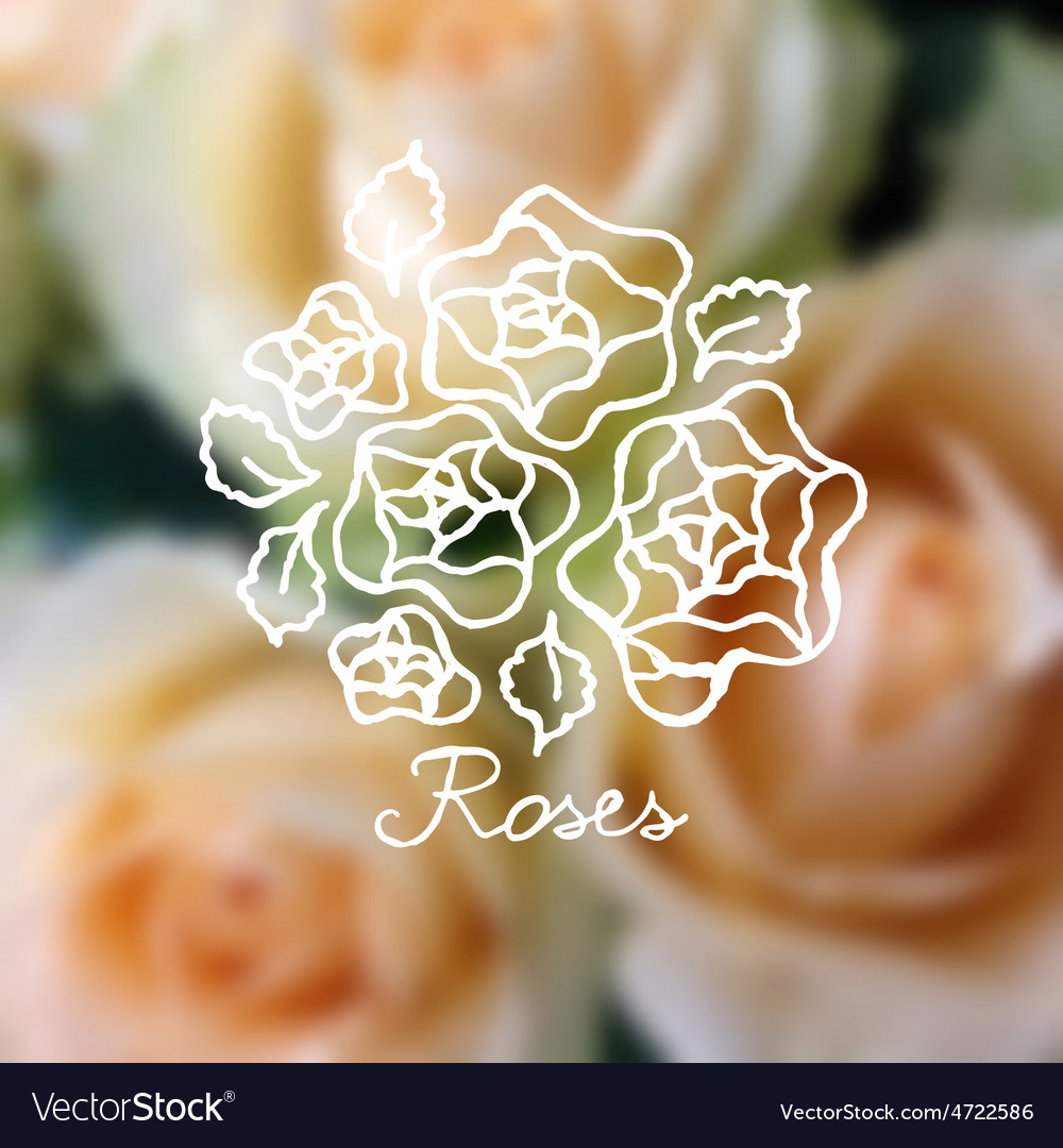 Handsketched bouquet of roses vector