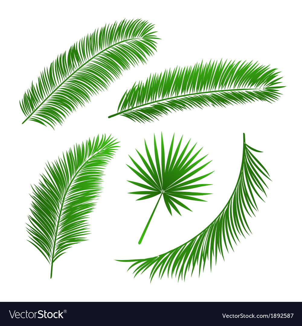 Collection of palm tree leaves vector | Price: 1 Credit (USD $1)