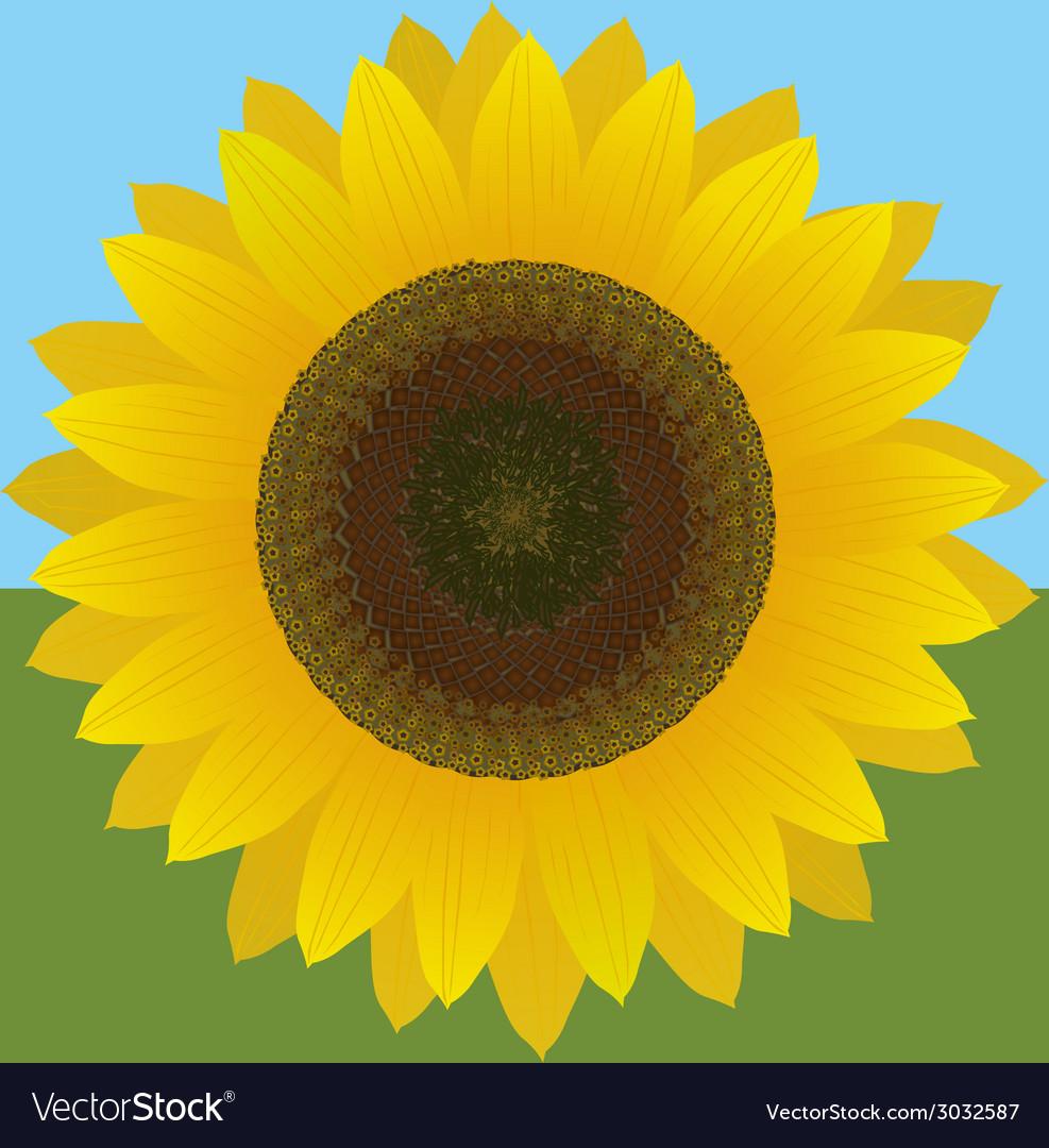 Sunflower vector | Price: 1 Credit (USD $1)