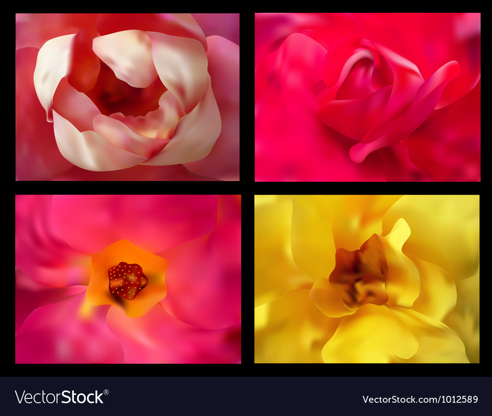 Roses close up vector | Price: 1 Credit (USD $1)