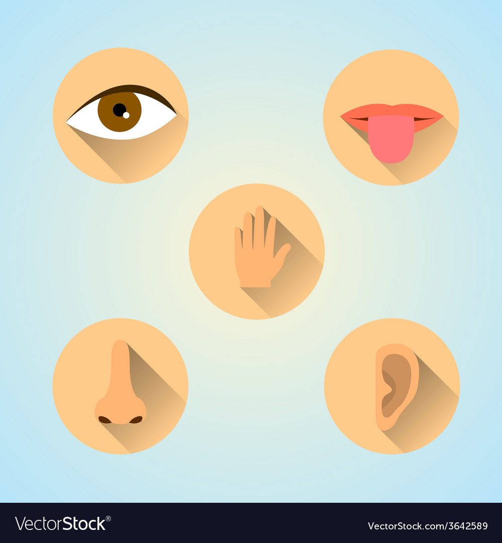 Senses icons vector | Price: 1 Credit (USD $1)