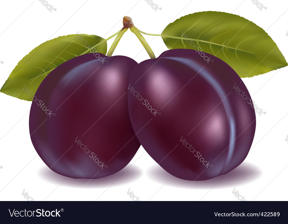 Two plums vector | Price: 1 Credit (USD $1)