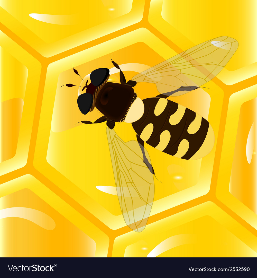 Bee and honeycomb vector | Price: 1 Credit (USD $1)