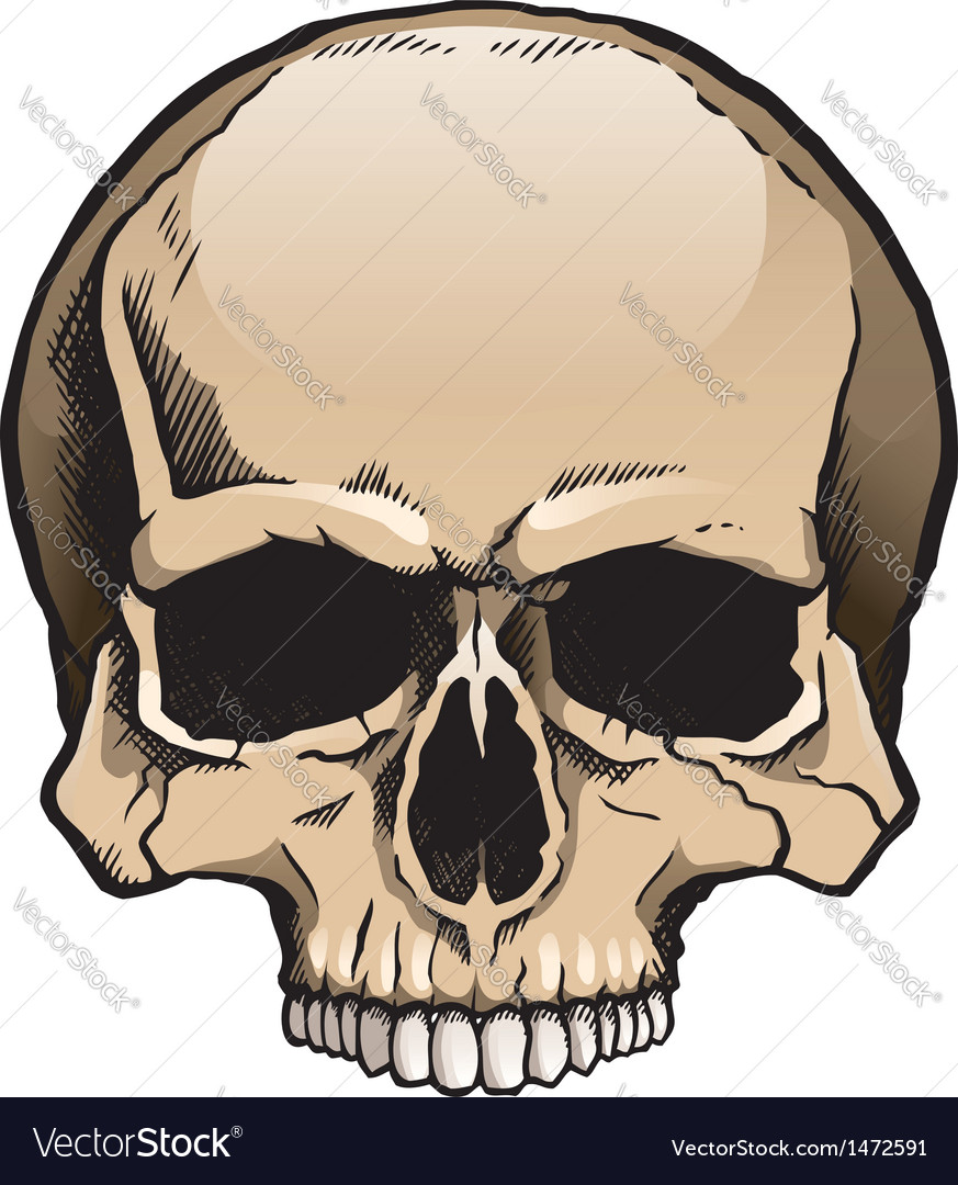Colored human skull without lower jaw vector | Price: 3 Credit (USD $3)