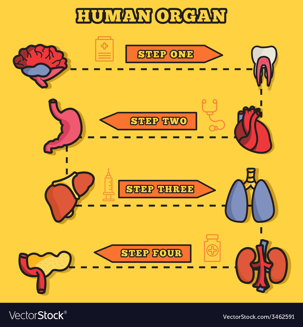 Set flat human organs icons concept backgro vector | Price: 1 Credit (USD $1)