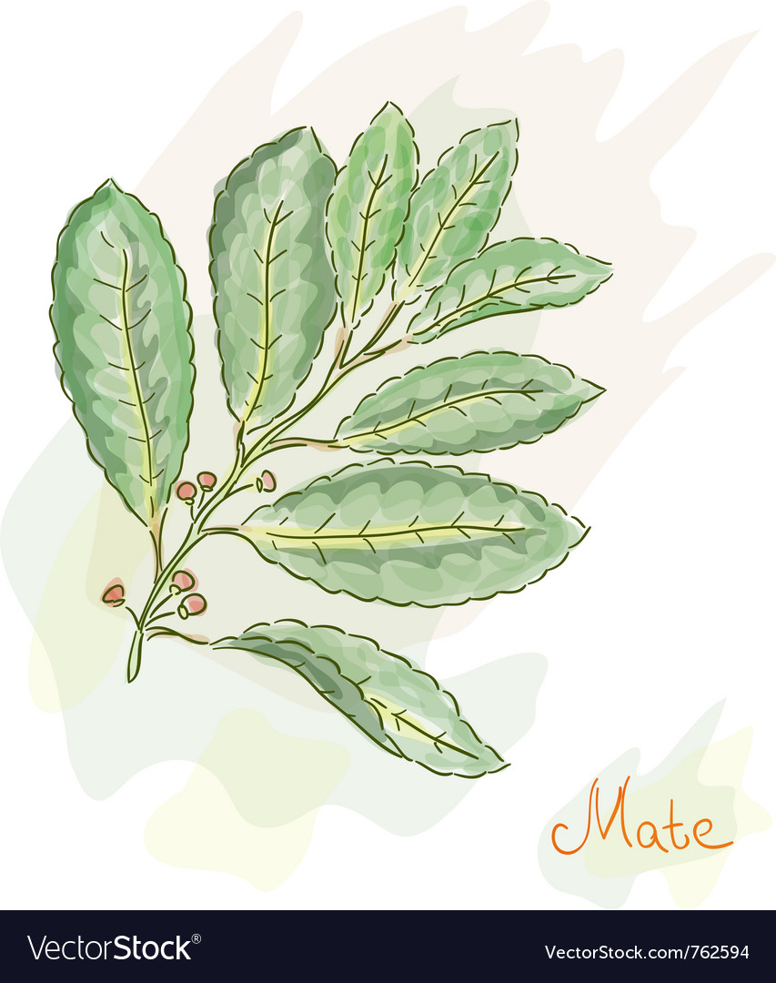 Yerba mate watercolor style vector | Price: 1 Credit (USD $1)