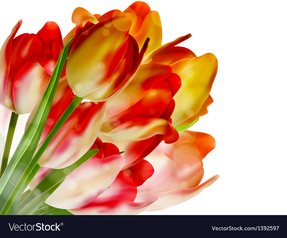 Tulips over white with copyspace eps 10 vector | Price: 1 Credit (USD $1)