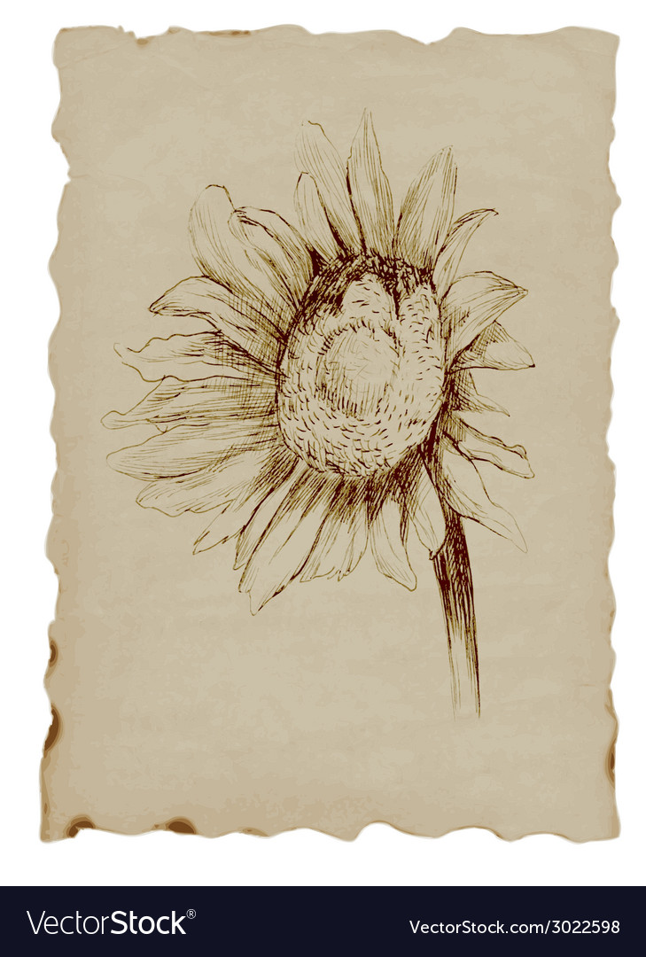 Sun flower vector | Price: 1 Credit (USD $1)