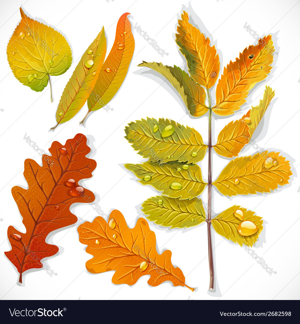 Yellow and red autumn leaves vector | Price: 3 Credit (USD $3)