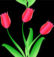 Elegance seamless color tulips pattern vector