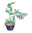 Sketch of lemon tree vector