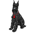 Dog breed giant schnauzer color black vector