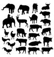 Black silhouettes of elephants cows bulls vector