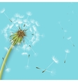 White dandelion with pollens isolated vector