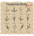 Footprints birds - set vector