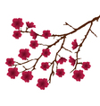 Blossom red vector