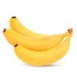 Fresh bananas isolated on white vector