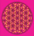 Sacred geometry flower of life symbol vector
