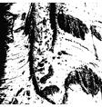 Poplar bark vector