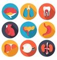Set flat human organs icons concept backgro vector
