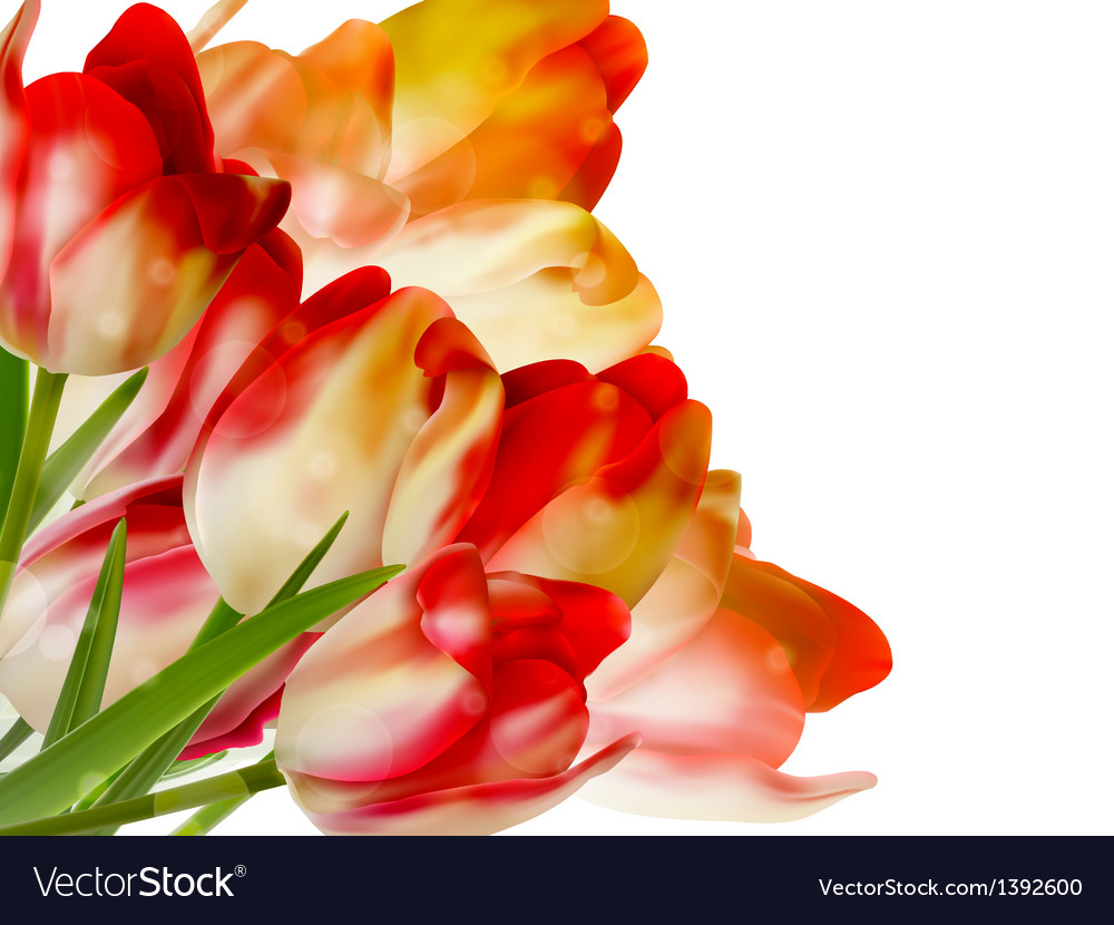 Bouquet spring red tulips on white eps 10 vector   Price: 1 Credit (USD $1)