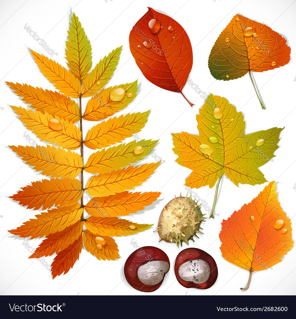 Yellow and red autumn leaves and chestnut vector | Price: 3 Credit (USD $3)