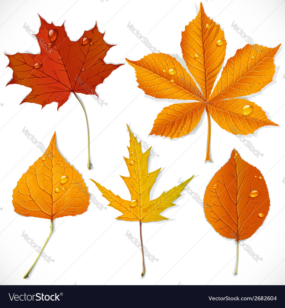 A set of yellow and red autumn leaves vector   Price: 3 Credit (USD $3)
