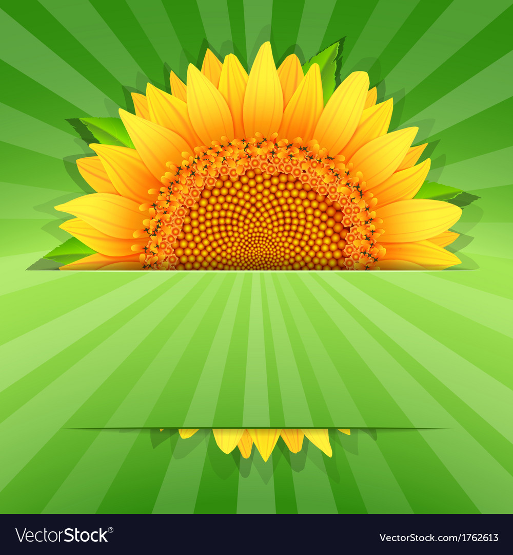 Summer sunflower poster template vector | Price: 1 Credit (USD $1)