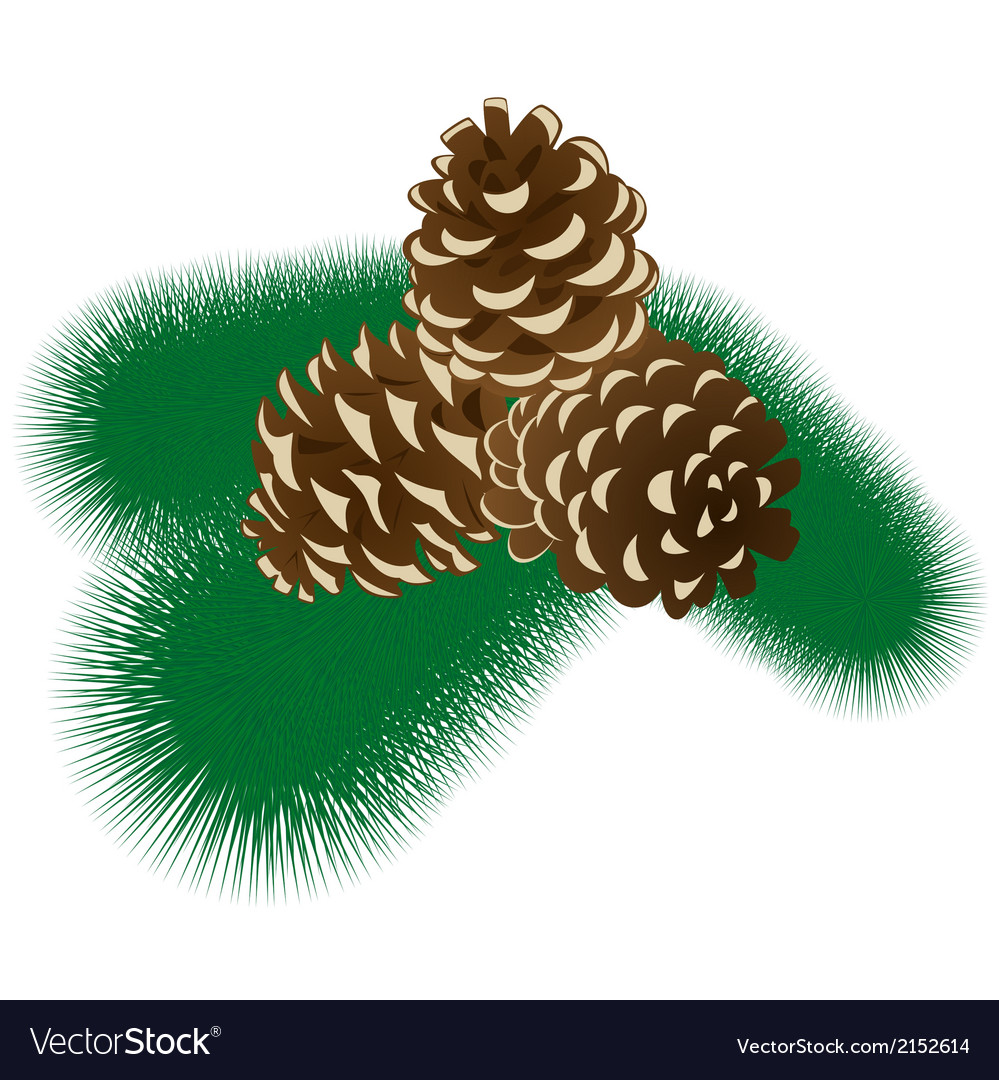 Fur tree branch with cones vector | Price: 1 Credit (USD $1)