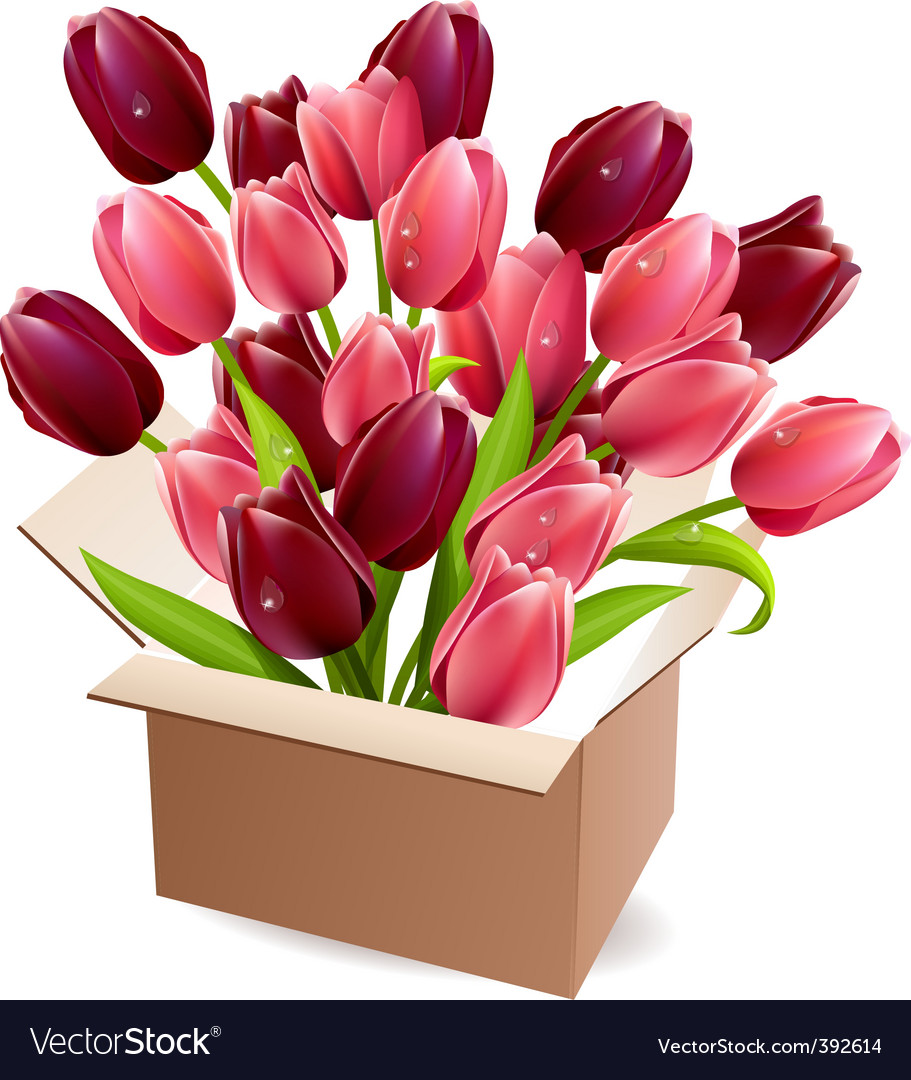 Open box full of tulips vector | Price: 1 Credit (USD $1)