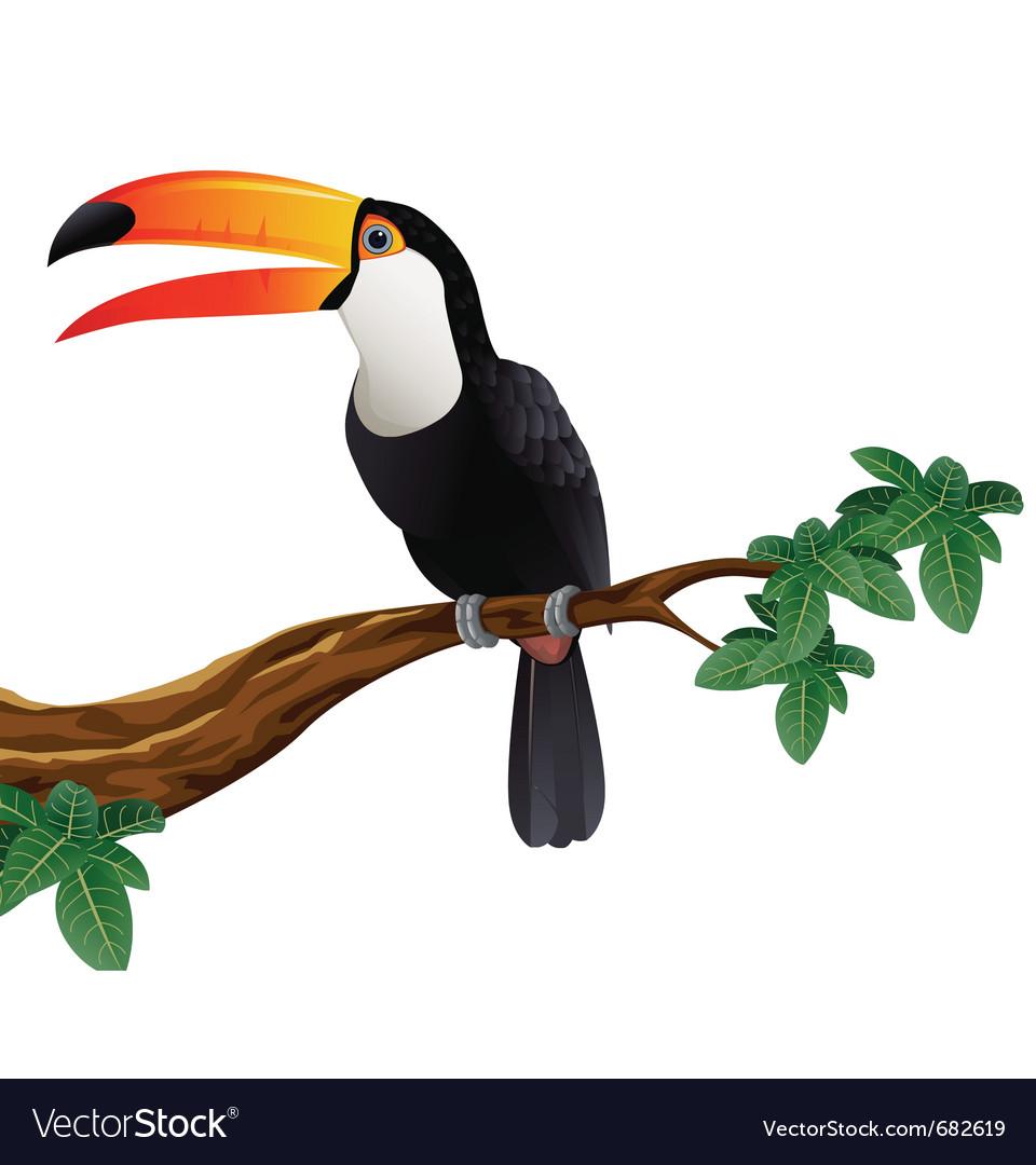 Toucan bird vector | Price: 3 Credit (USD $3)