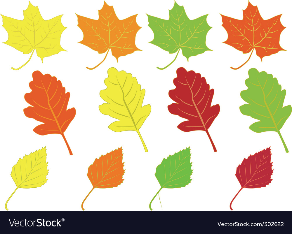 Collection of colorful autumn leaves vector | Price: 1 Credit (USD $1)