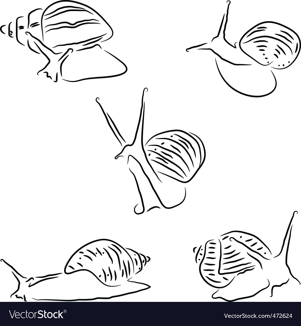 Achatina snail vector | Price: 1 Credit (USD $1)