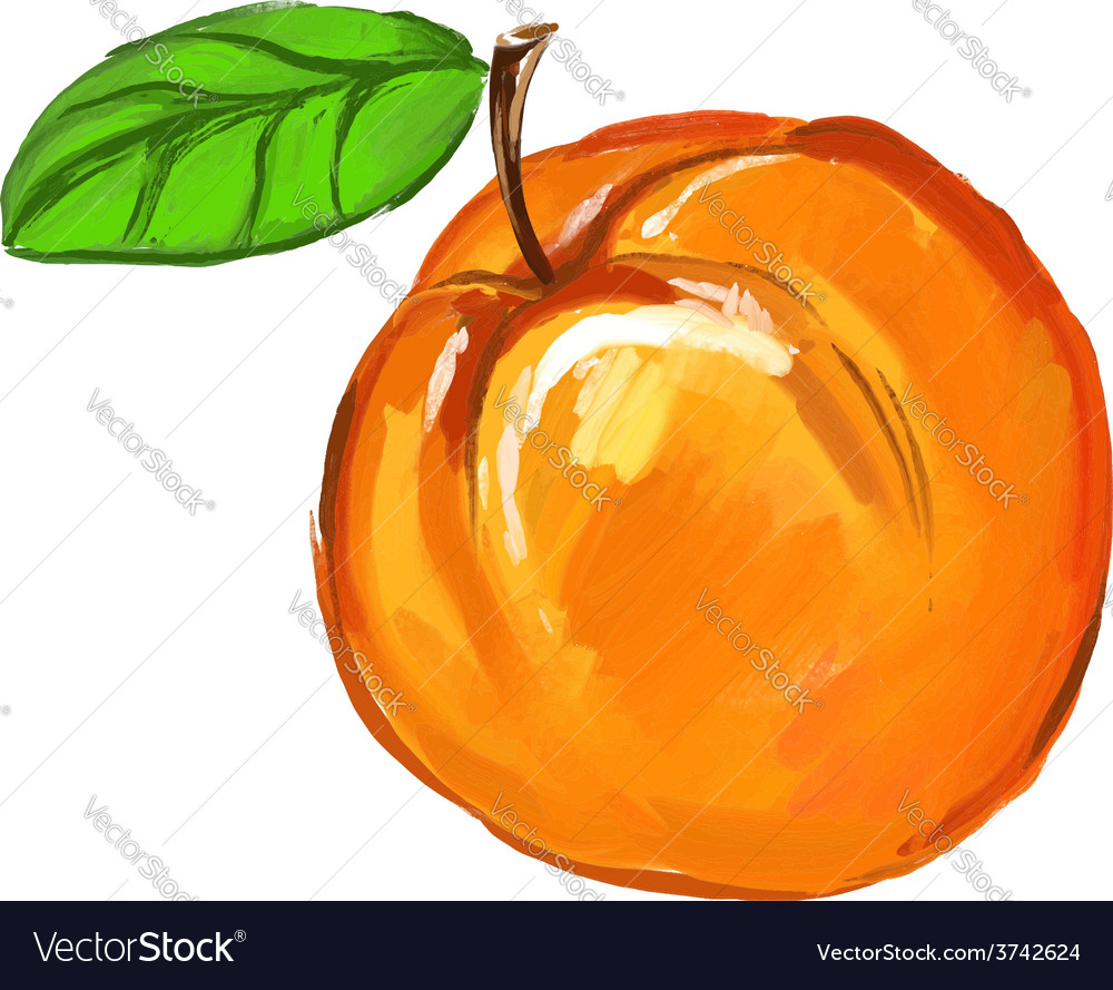 Peach of ink hand drawn vector | Price: 1 Credit (USD $1)