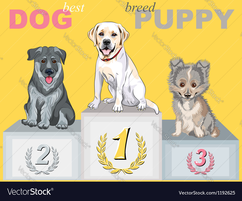 Smiling puppy dog champion on the podium vector | Price: 3 Credit (USD $3)