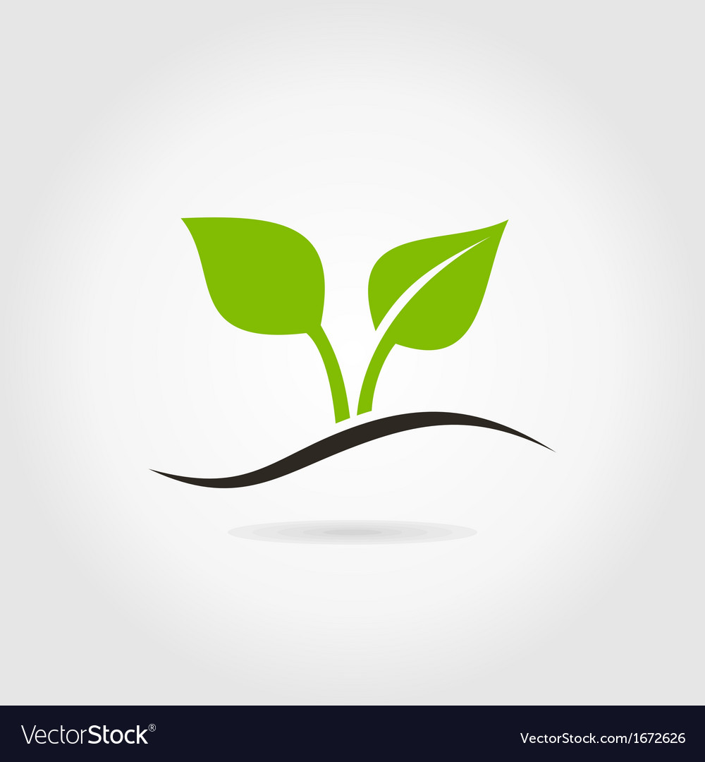 Sprout vector | Price: 1 Credit (USD $1)