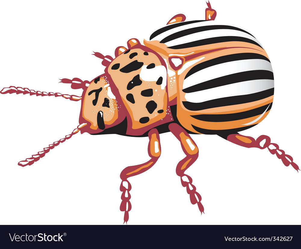 Do potato beetle vector vector | Price: 1 Credit (USD $1)
