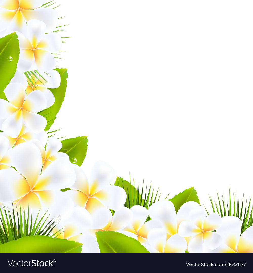 Frangipani flowers borders with leaf vector | Price: 1 Credit (USD $1)