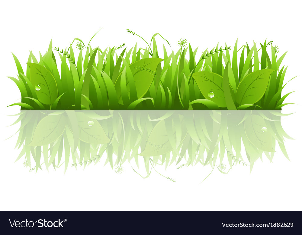 Grass and leafs vector | Price: 1 Credit (USD $1)