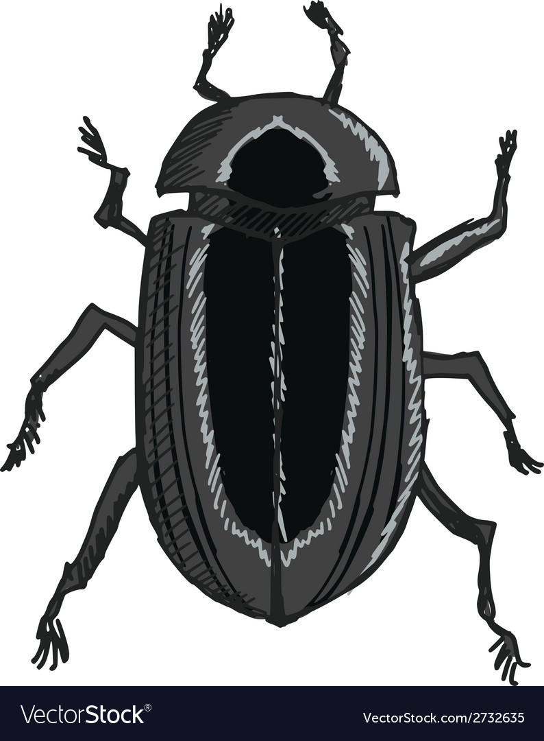 Scarab vector | Price: 1 Credit (USD $1)