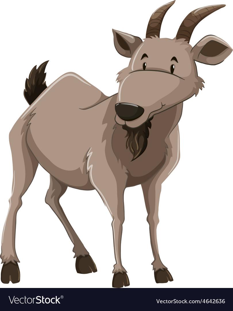 A goat vector