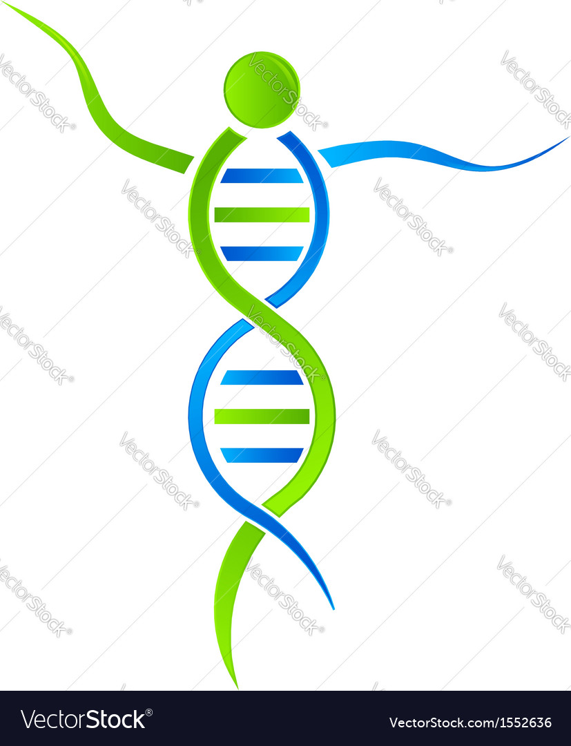 Dna person logo vector | Price: 1 Credit (USD $1)